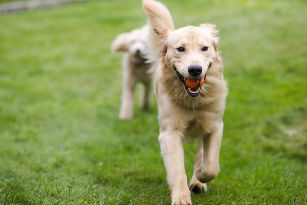 Dfw Service Dog Training